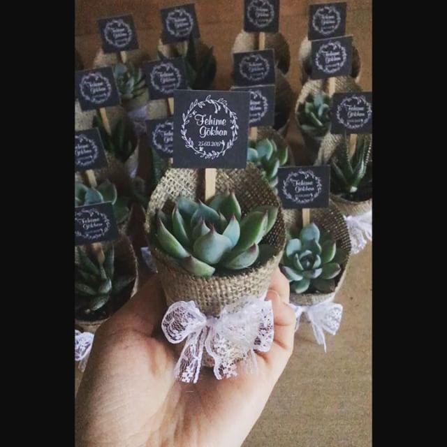 Sukulentlerin ölçüleri ile ilgili çok soru geliyor onlara toplu cevap olması dileğiyle🙋🏻mum gibi sukulardan mutlu cumalar🎈🎈☺ #sukulent #succulent #succulove #succulents #kaktus #cactus #nişanhatırası #nikahşekeri #kırdüğünü #hediye #gifts #weddingfavour #çiçek #flowers #bestoftheday #babyshower #disbugdayi #kurumsalhediye #love #nişanhatırası #nişanhediyesi #sözhatırası #sözhediyesi #düğünhediyesi #düğünhatırası #l4l #vsco #vscocam