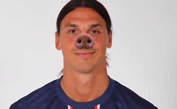 Szwed zrobił sobie nowy świński nos • Zlatan Ibrahimovic bohaterem śmiesznego obrazka • Nowy wygląd gwiazdy PSG • Wejdź i zobacz >> #psg #zlatan #ibrahimovic #memes #football #soccer #sports #pilkanozna #funny
