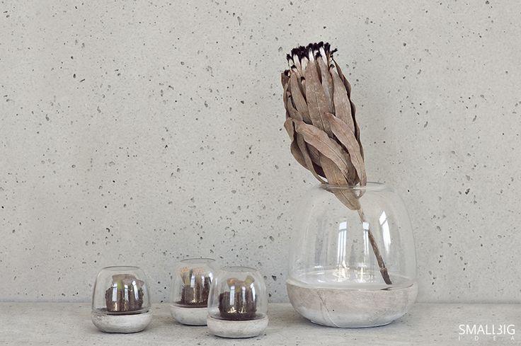 © smallbigidea.com living stones – Lithops.