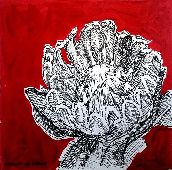 Hermien Van Der Merwe; Title: Fynbos:  Table Mountain Fynbos 6 Medium: Pen-and-Ink drawing on paper with oil paint background Size: 200 x 200mm