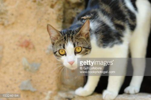 Street cat looking surprised. #cressensac... #cressensac: Street cat looking surprised. #cressensac… #cressensac