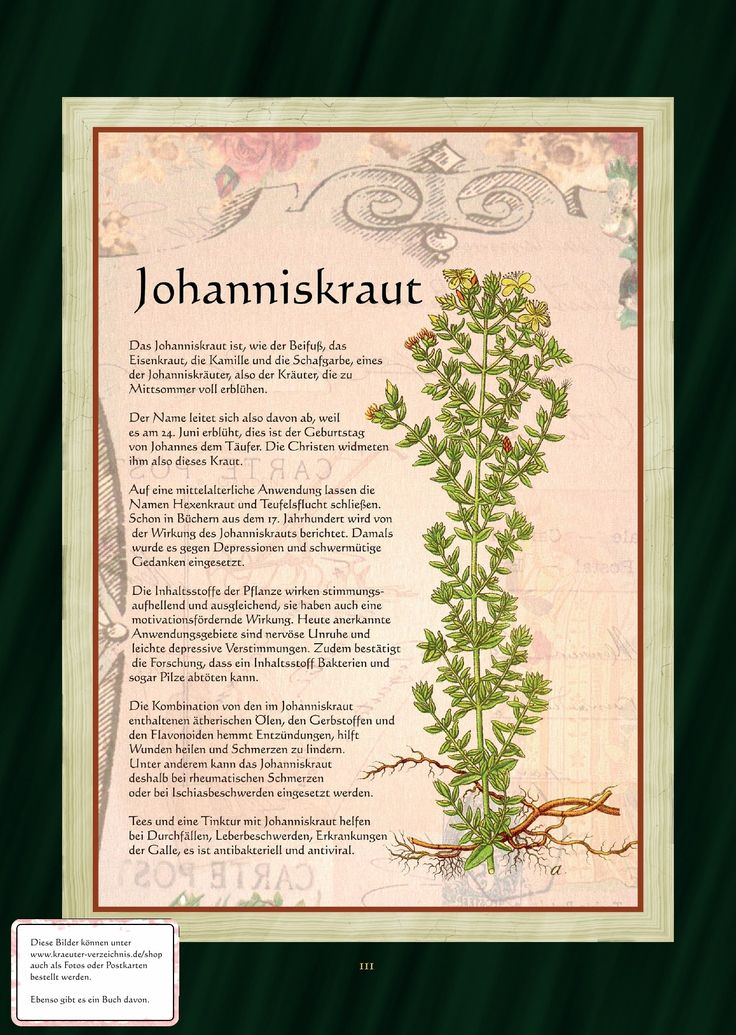 Johanniskraut - Rotöl - Johanniskrauttee