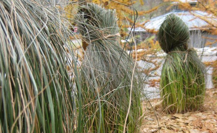 Ziergarten: Die Besten Gartentipps Im Dezember | Inverno Garten Januar Was Ziergarten Tun