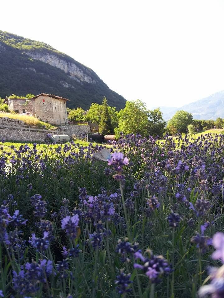 (6) Azienda Agricola Maso Giomo