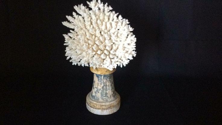Special white coral mounted on antique base.  Corallo bianco, montato su una antica base.  cm 48 X 22 X 70 h