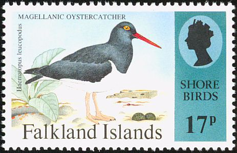 Magellanic Oystercatcher stamps - mainly images - gallery format