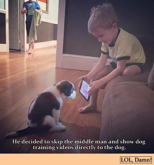 It's a dog training video instructing dogs on how to watch dog training videos. | Get more fun follow @gwylio0148