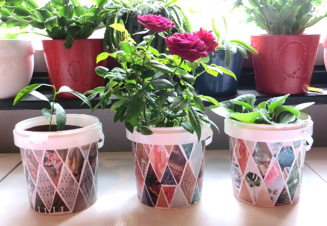 How to recycle yogurt containers into flower pots crafts for Flower pot making with waste material
