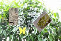 Spider Nest Sticker くもの巣のような粘着シート