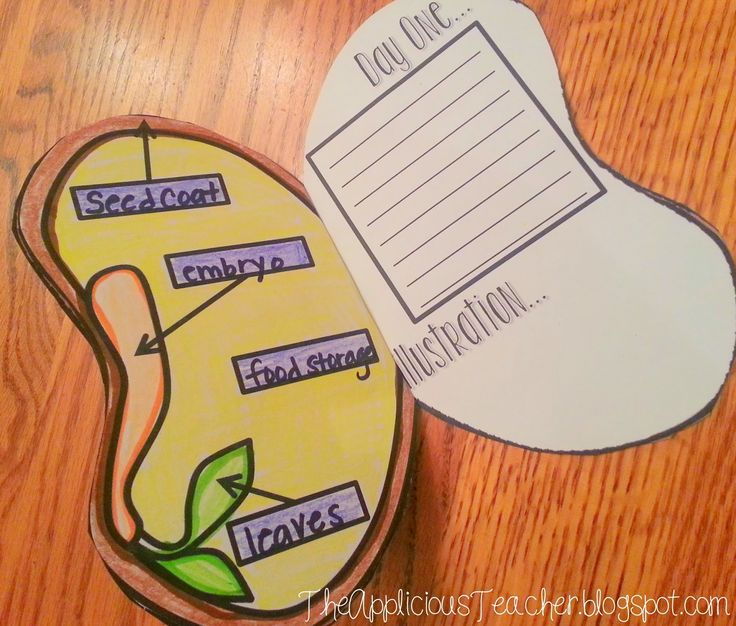 Week 1: Interactive seed journals so students can record their data as they grow a seed. $