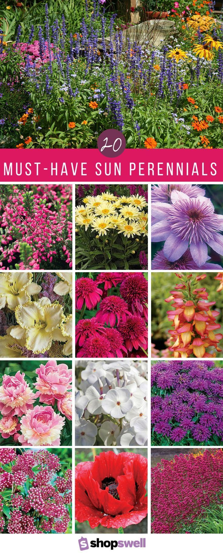 An easy-to-grow collection of the best sun perennials - perfect for any flower g...