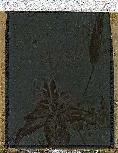 Iris ( negative )