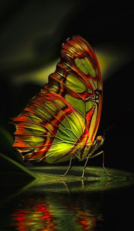 Beautiful butterfly near Limburg, Germany • photo: Detlef Knapp on 500px