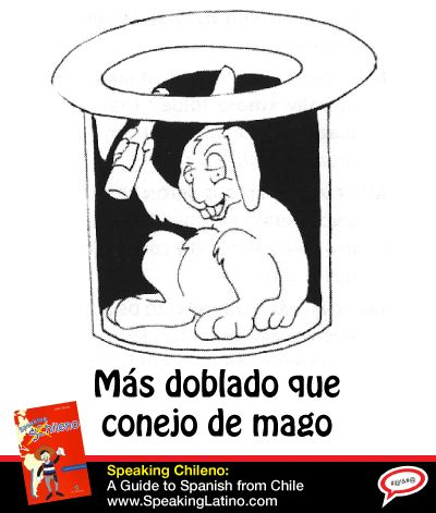Más doblado que conejo de mago | Literal translation: More folded than a magician's rabbit. Meaning: Extremely drunk or high. #SpanishSayings #Chile
