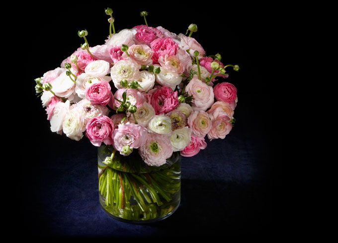 Renoncules fleurs pinterest for Fleurs a domicile livraison gratuite
