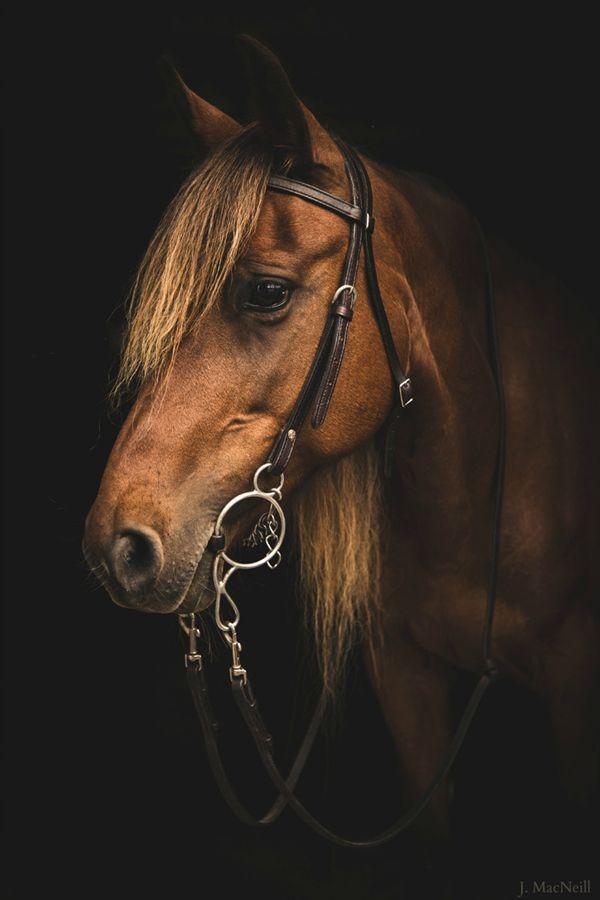 25 Cute Animal Photography Photos Collection | Photography | Design Magazine