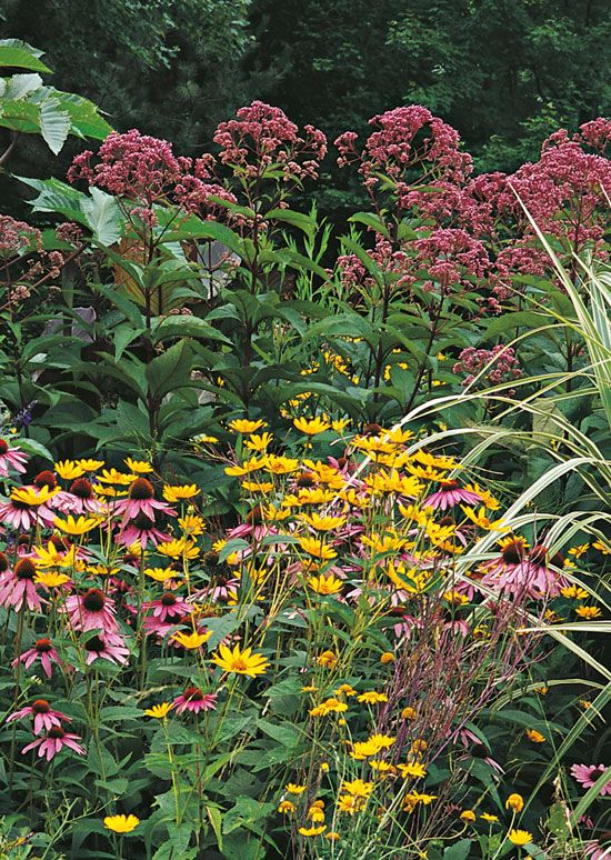 215 best a home garden images on pinterest - The well tended perennial garden ...