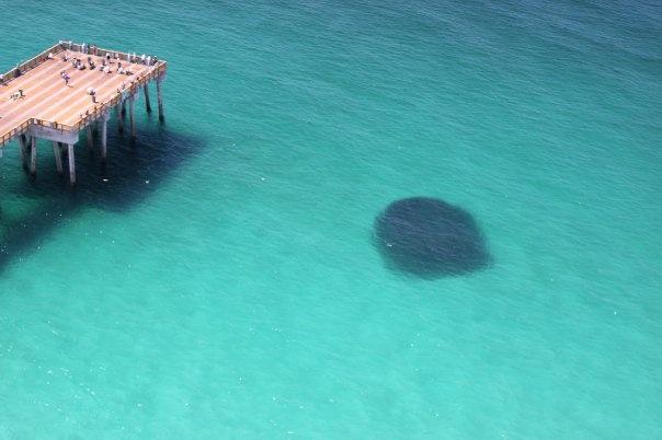 Bait fish off the pier in panama city beach fl www for Panama city fishing pier