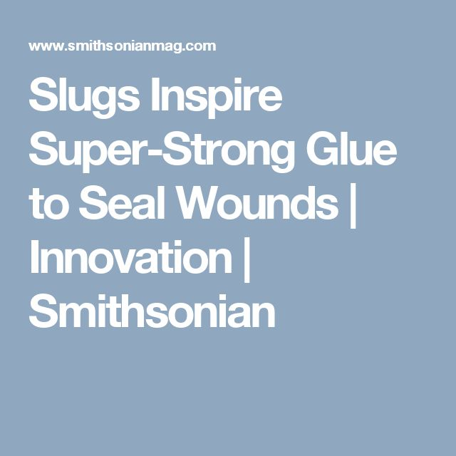 Slugs Inspire Super-Strong Glue to Seal Wounds            Innovation   Smithsonian