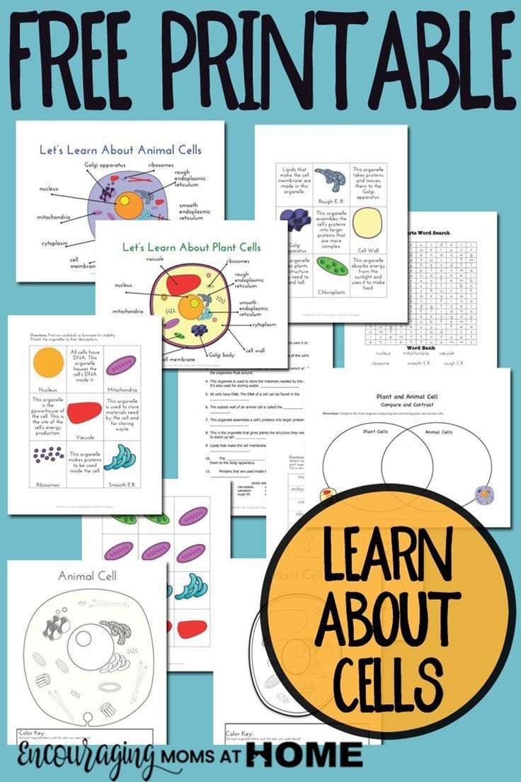 Plant And Animal Cell Printables Grades 4 6 Science