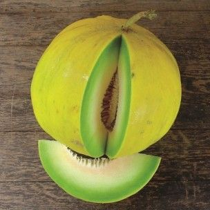 """Le Melon 'Boule d'or' également appelée """"Golden Perfection"""" est une variété française ancienne et rare qui produit des fruits couleur jaune d´or et à chair vert pâle parfumée et absolument délicieuse. De très bonne conservation, les fruits de ce melon se conservent plusieurs semaines dans un endroit frais."""