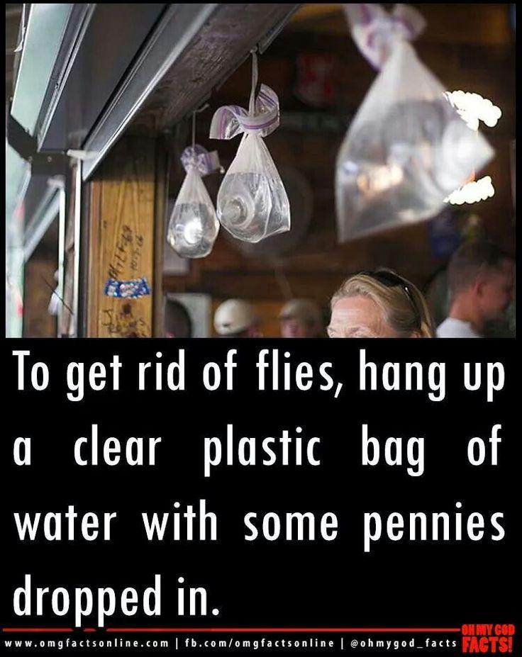 Vliegen verjagen