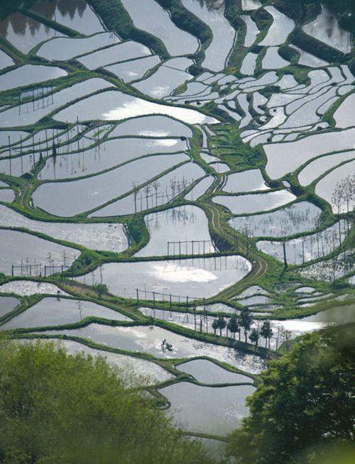 reflection on rice paddies