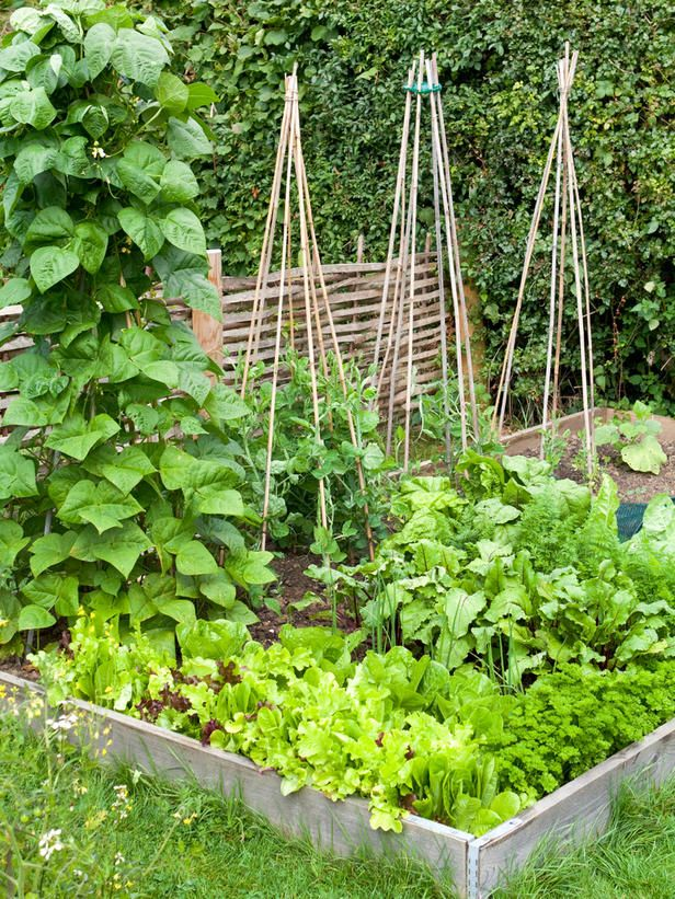 Top 10 Rules for Growing a Kitchen Garden : Outdoors : Home & Garden Television
