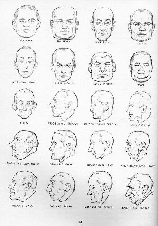Animopus: Head Prespective Reference