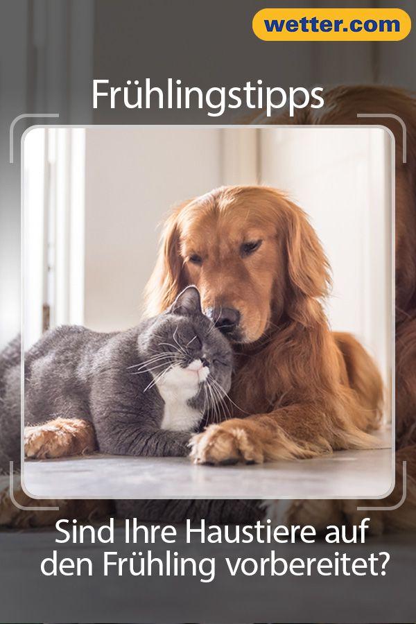 Sind Ihre Haustiere Auf Den Fruhling Vorbereitet Tiere Haustiere Und Hunde