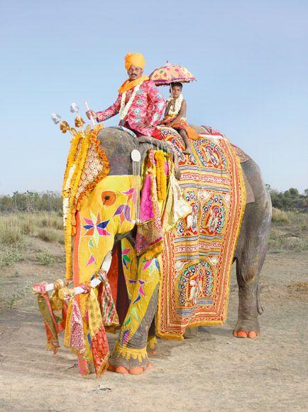 派手な色彩がかわいいゾウ。インド北部の都市ジャイプルの象祭り。インド 観光・旅行の見所!                                                                                                                                                                                 もっと見る