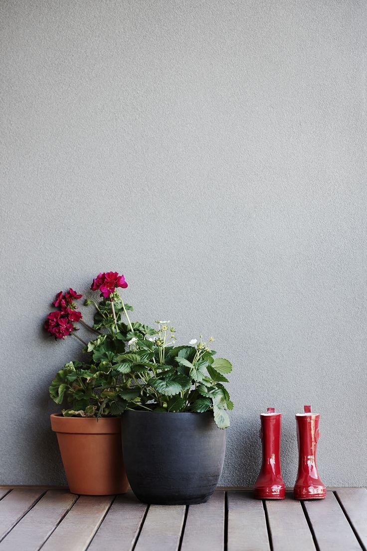 #plants #flowers #gumboots