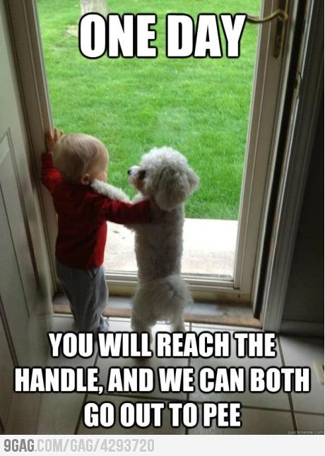 haha: Oneday, Best Friends, Dogs, So Cute, Bestfriends, Too Funny, Kids, So Funny, Animal