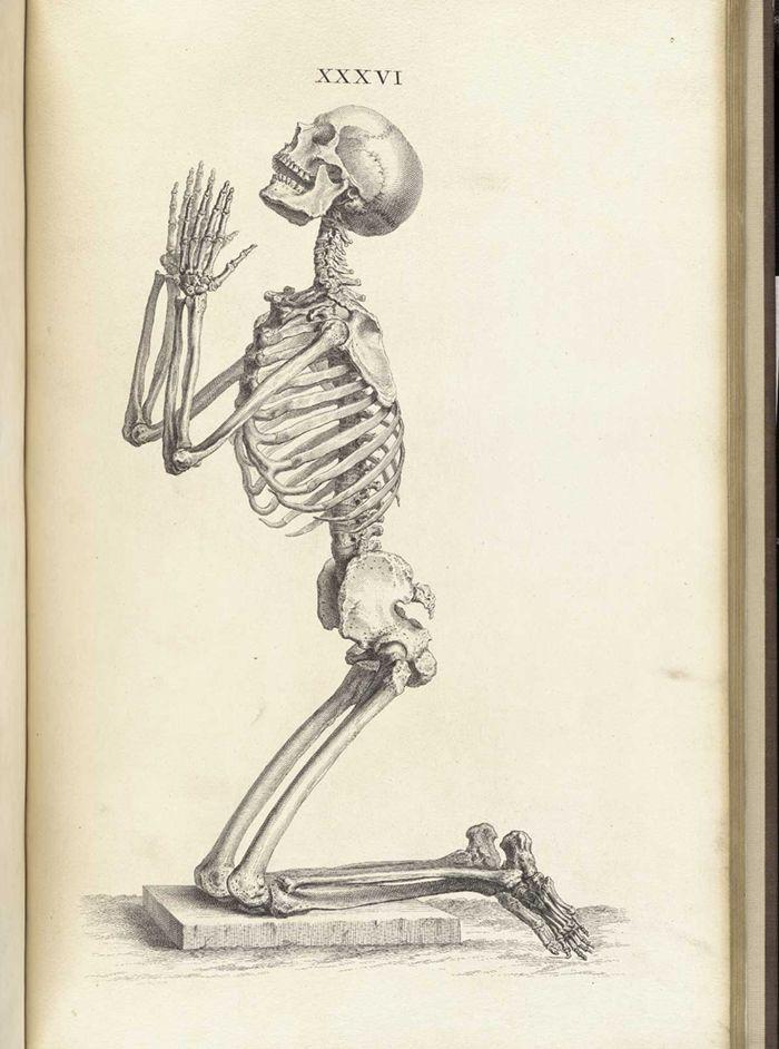 19 besten Medical Illustration Bilder auf Pinterest   Menschliche ...