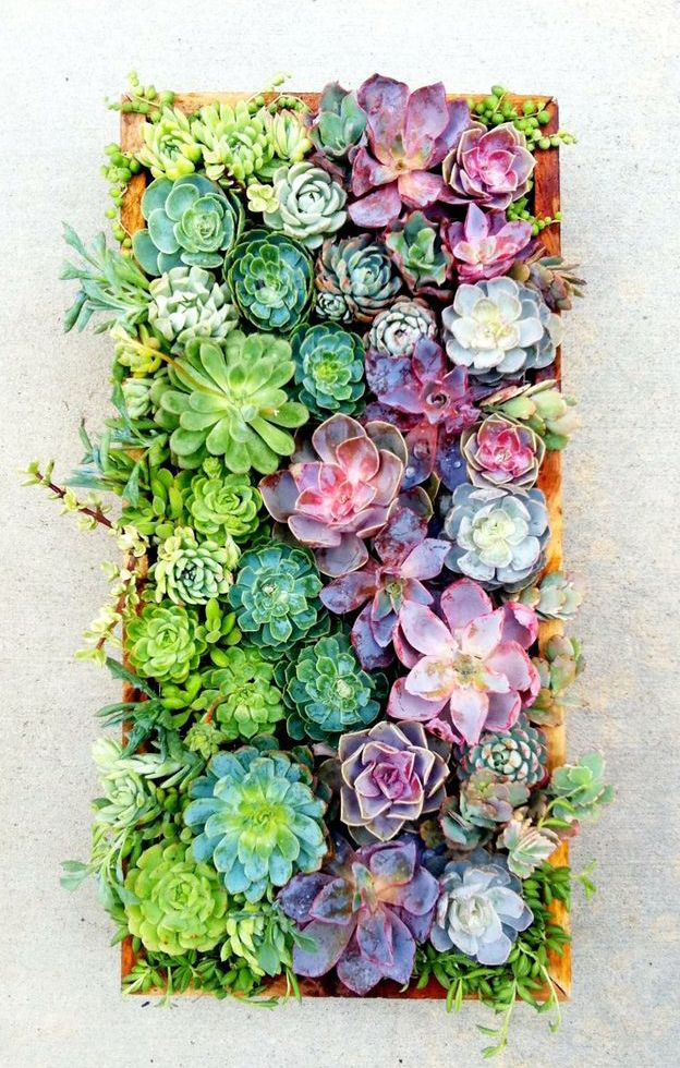 Succulent Terrariums and Vertical Hangings | ArtCream