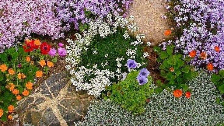 planes couvre et fleurs multicolores pour une ambiance festive dans le jardin