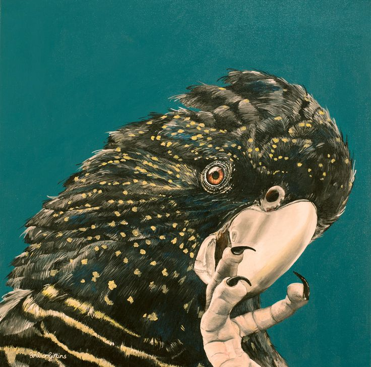 """""""Black Cockatoo"""" by Amber Gittins. Paintings for Sale. Bluethumb - Online Art Gallery"""
