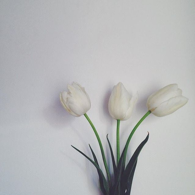 #white #tulips #flowers