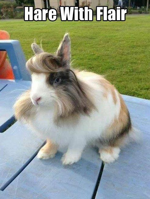 He's A Hunka Hunka Bunny Love http://www.i-am-bored.com/bored_link.cfm?link_id=96049