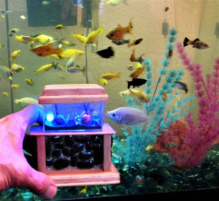 17 Best Images About Project Fish Tank On Pinterest: 17 Best Ideas About Small Fish Tanks On Pinterest