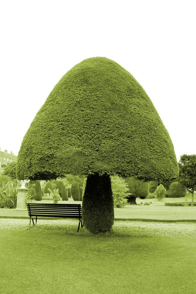 Oh Shit This Tree Thinks Itu0027s A Mushroom But Itu0027s Great At What It Does. Gg  Tree Love This Topiary In Drummond Castle Gardens, Crieff