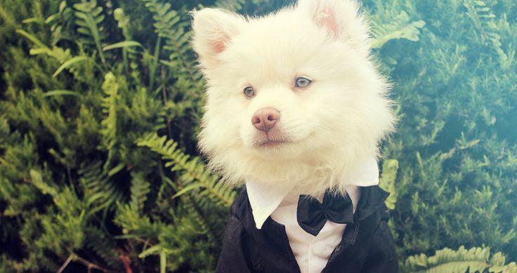 Deze honden zijn helemaal klaar voor Valentijn. Jouw hond ook? Wellicht hebben wij nog leuke ideeën voor je.