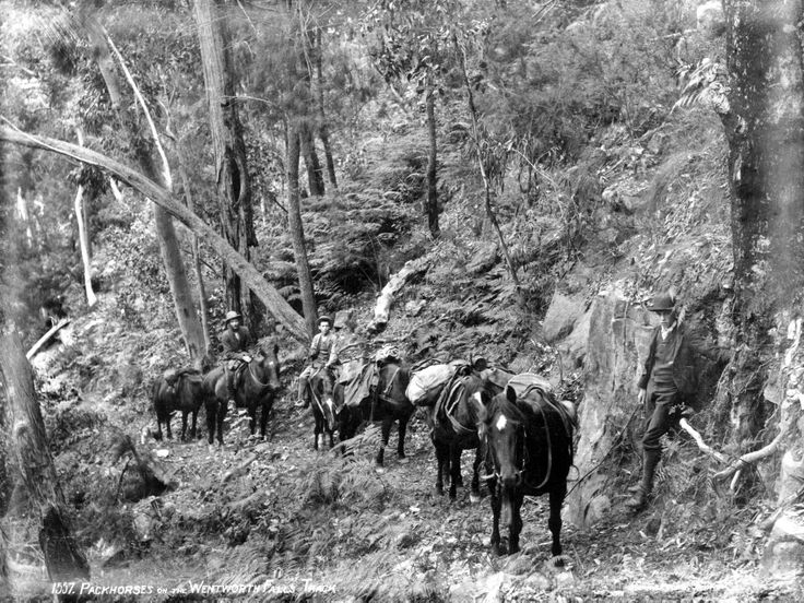 Packhorses on the Wentworth Falls track