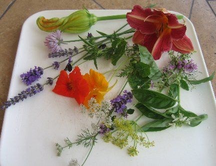 How To Choose Edible Flowers - Edible Flower Chart by Linda Stradley.  Lists 76 kinds of edible flowers, plus helpful tips and warnings about flowers or parts of flowers to avoid.  And instructions for picking, cleaning, preserving, crystallizing, making tea, ice cubes, syrup, and butter with flower petals.