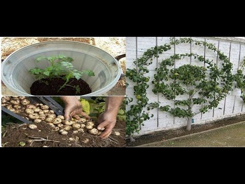 Tercera parte de trucos y proyectos de jardinería a lo mejor no conoces, y te pueden servir. Espero te guste este video.
