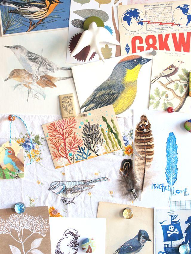 Mejores 28 imágenes de Bird Watching en Pinterest   Observación de ...