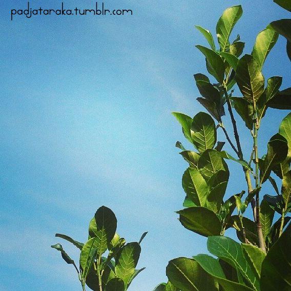 jakefruit tree