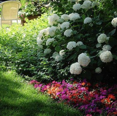 68 best southern shade garden images on pinterest gardening flowering shade garden ideas choosing hydrangeas annabelle h mightylinksfo Image collections