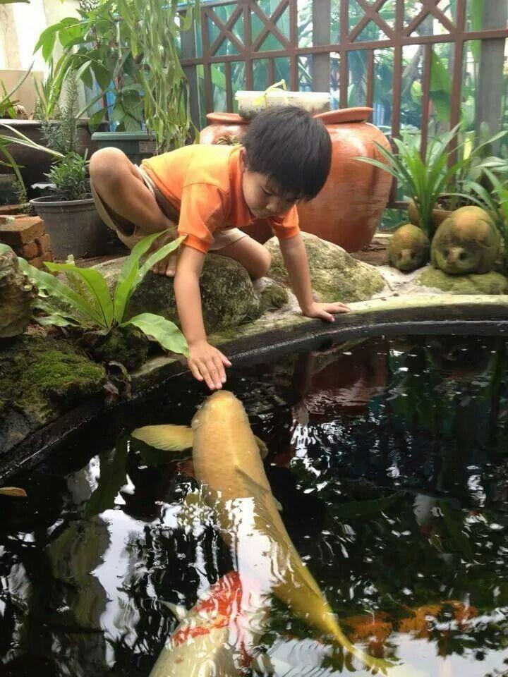 78 best images about koi on pinterest cool fish tanks for Koi carp breeding