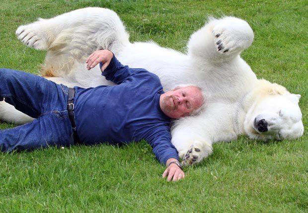 sleepy: Best Friends, Polar Bears, Pet, Polarbear, Friendship, Adorable, Funny Animal, Photo, Man